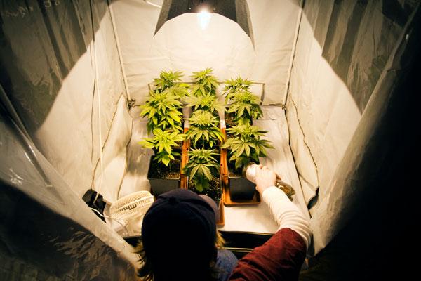 Cannabis Grow Tent