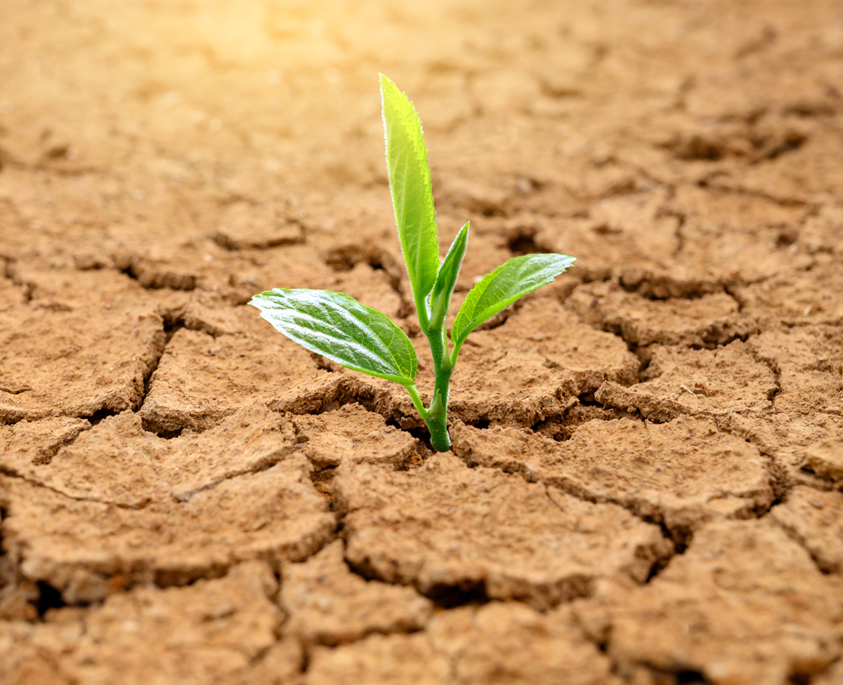 Drought with Plant