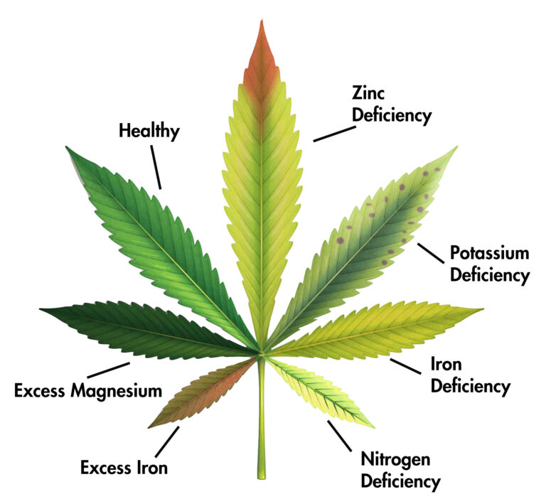 Cannabis Leaf Compounds: Boron, Zinc, Potassium, Iron, Nitrogen, Iron and Magnesium