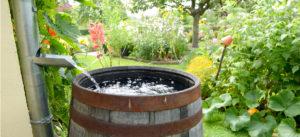 Rainwater Barrell